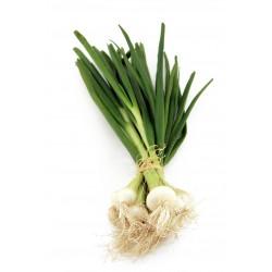 Farine de blé tendre