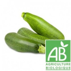 Courgette longue verte bio 500 g