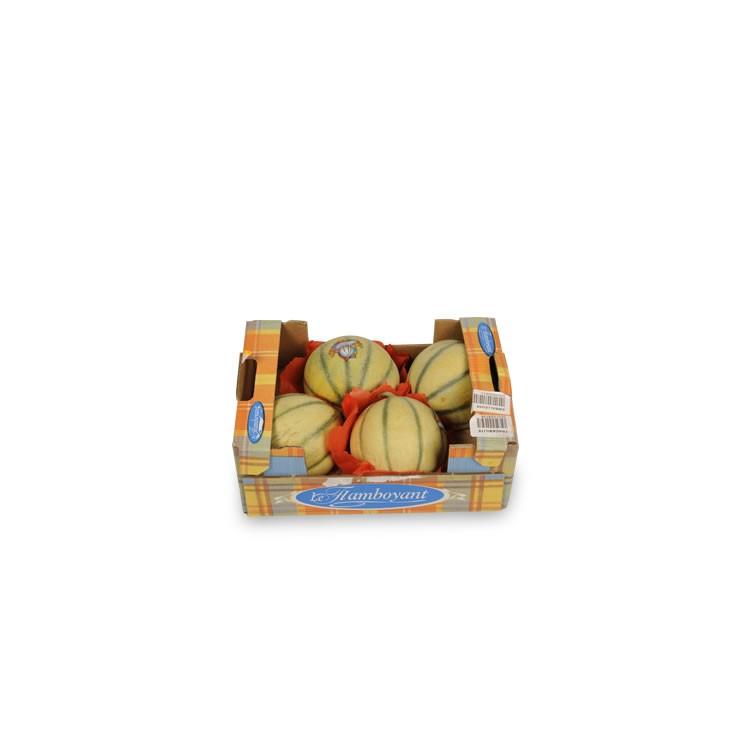 Melon le FLamboyant Bio pièce