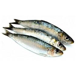 Sardines océan 500 g