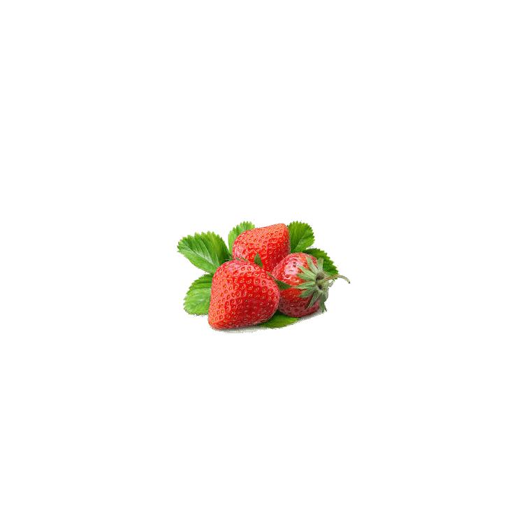 Salade Chêne rouge
